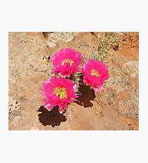 Escalante Cactus Photographic Print