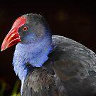 BIRD No1 by Joseph Darmenia