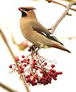 the waxwing and the berry part 3 presenting the prize by Grandalf