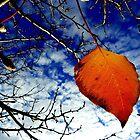 Last Leaf by Rinaldo Di Battista