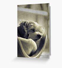 Digby Greeting Card