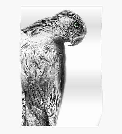 The Philippine Eagle Poster
