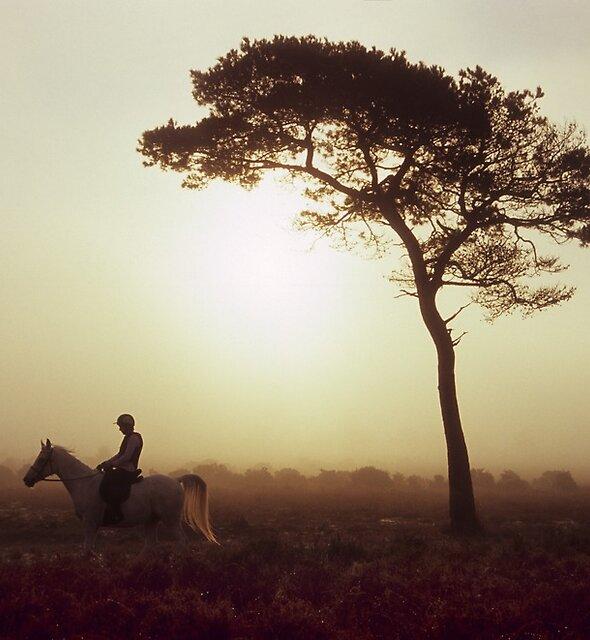 Horse Riding at Sunrise by Kasia Nowak