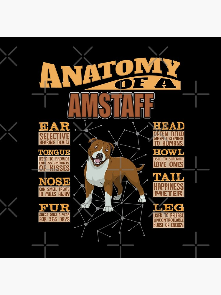 Anatomy Of A American Staffordshire Terrier - Funny American Staffordshire Terrier Design by dog-gifts