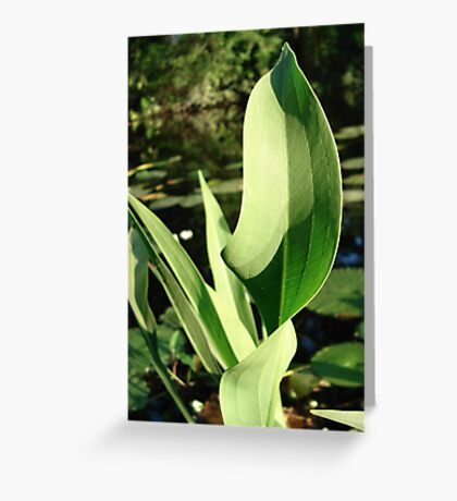 Duck Potato Foliage - light and shadow Greeting Card