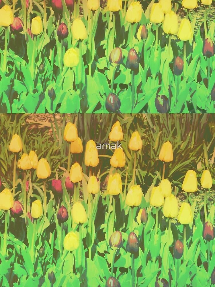 Card: Tulips by amak