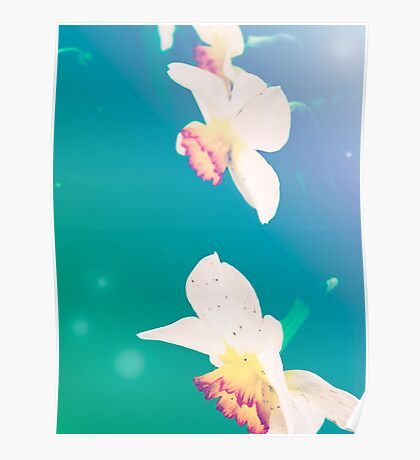Ethereal Daffodils Poster