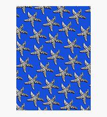 Starfish Blue Photographic Print