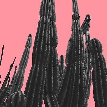 pink cactus by franciscomff