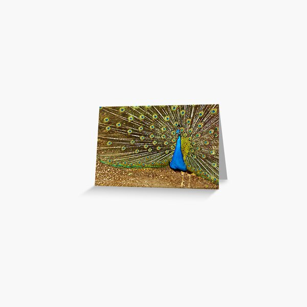 pavo real 2 Greeting Card