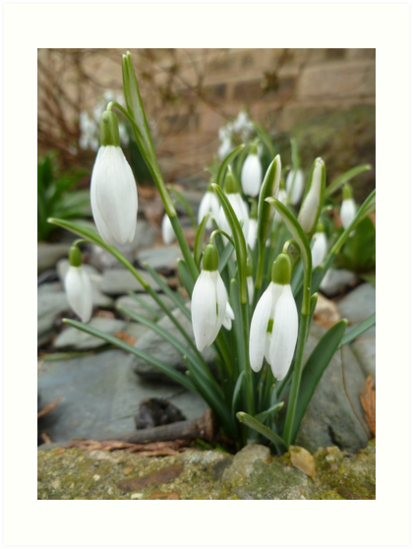 Signs of Spring by Vicki Spindler (VHS Photography)