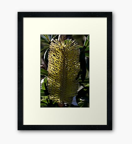 Candle in the day Light Framed Print