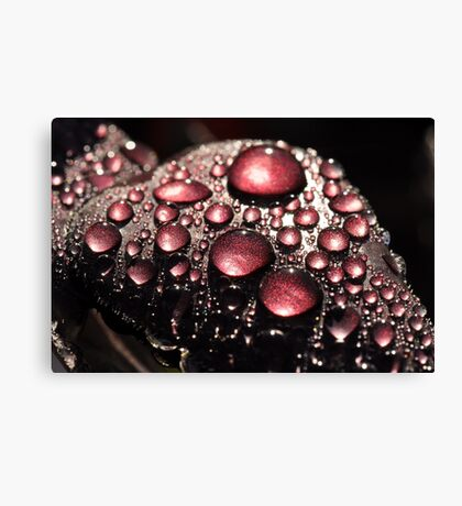 Nature's Bling  Canvas Print