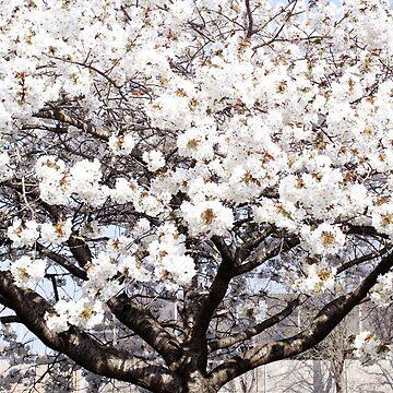 Flores de primavera de DanaAndTheBooks