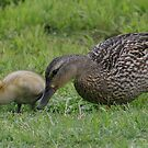 Mommy and Baby Duck by RockyWalley