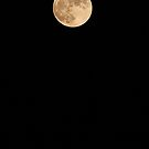 Harvest Moon by Sara Johnson