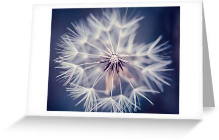 Dandelion Blue by alyphoto
