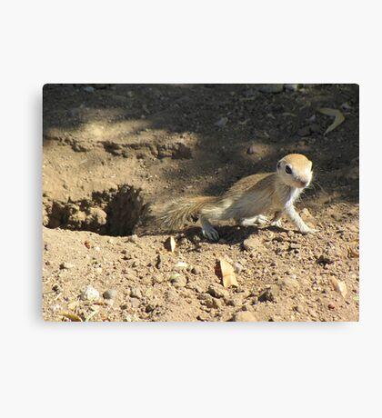 Round-tailed Ground Squirrel ~ Baby Canvas Print