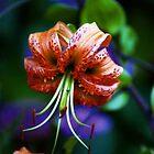 Lilium Lancifolium by Nerone
