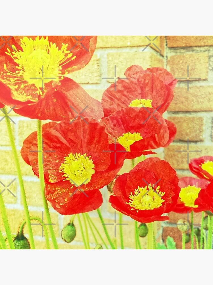 Poppyfied by OneDayArt