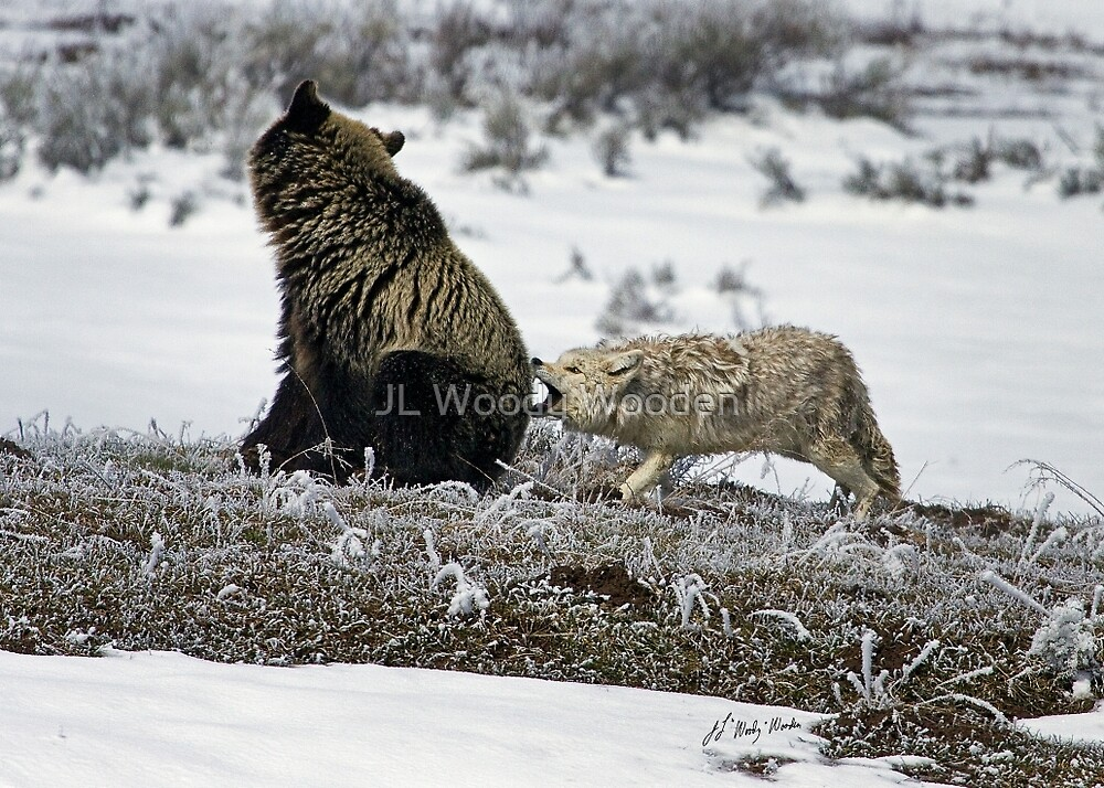 Grizzly Bear And Coyote by JL Woody Wooden