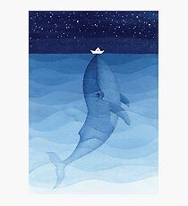 Blauwal, Meerestiere Fotodruck