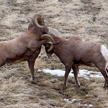 Big Horn Rams     #7812 by JLWoody15Wooden