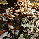 My Favorite Fungus Tree by WildestArt