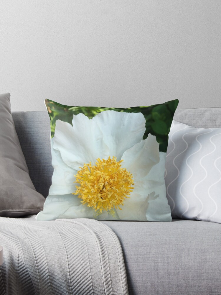 Floral Gift - Chinese Peony Photography  by OneDayArt