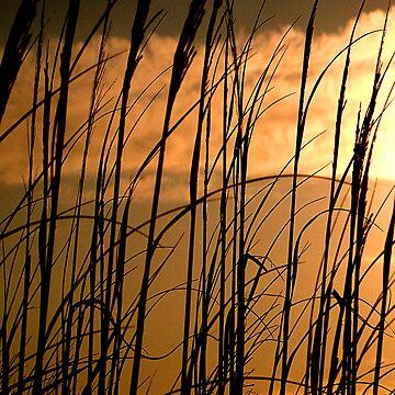 Sunset in Virginia Beach by curlybit