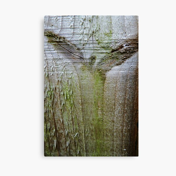 Angel of the wood Canvas Print
