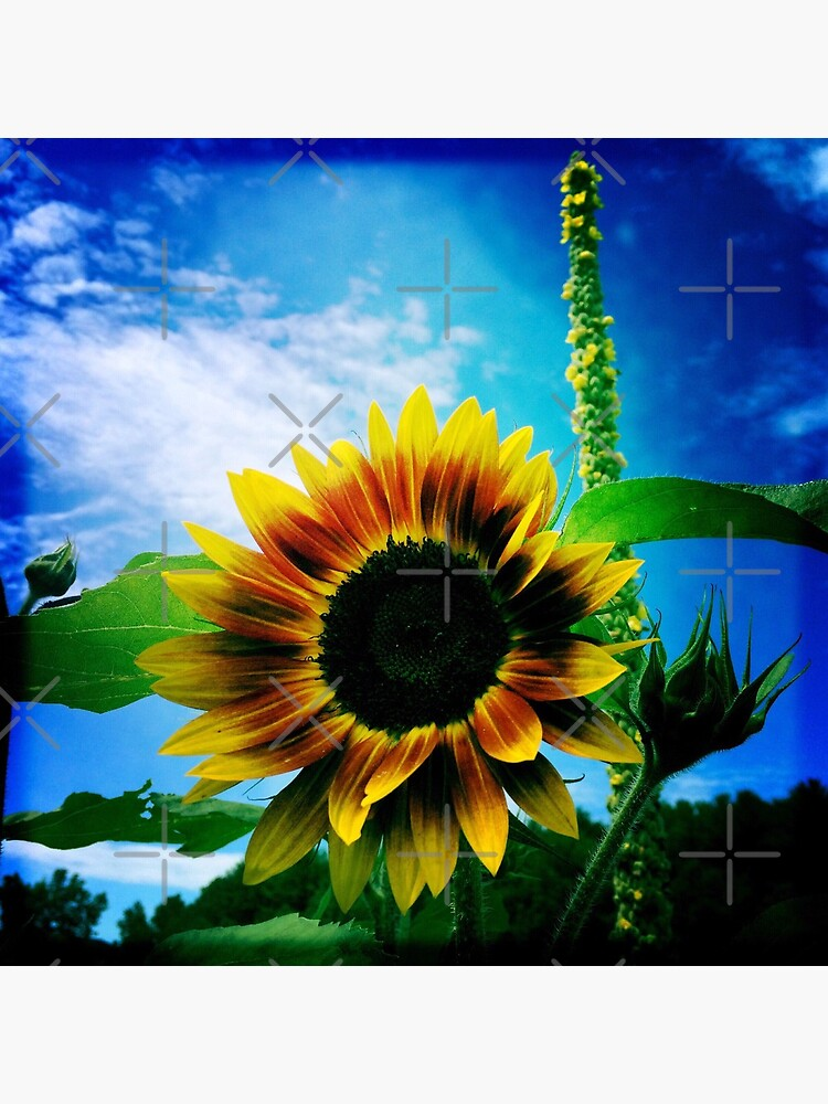 Sunflower Lover - Sunflower Art Photography by OneDayArt