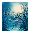 shining through the branches by Angel Warda