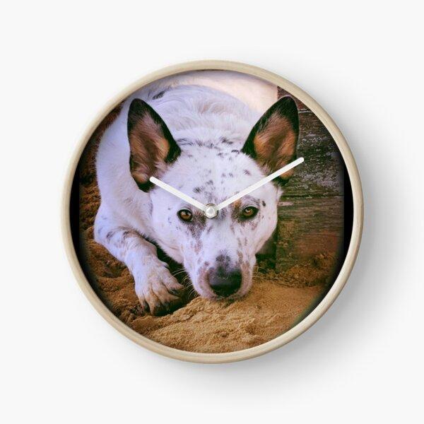 Healer dog - Pete Clock