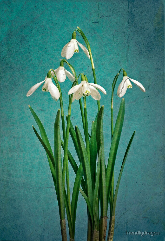 Vintage snowdrops by friendlydragon