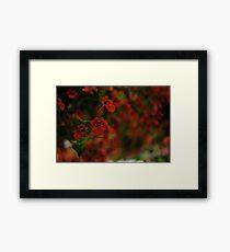 Red unfocused (macro)  Framed Print
