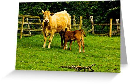 Mother & Calf by Trevor Kersley