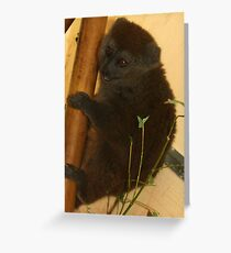 Alaotran gentle lemur Greeting Card