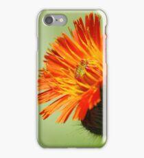 Orange Hawkweed iPhone Case/Skin