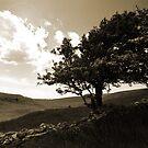 peace, silence, beauty by marshy69