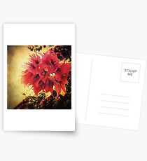 Sunset Bougainvillea Postcards