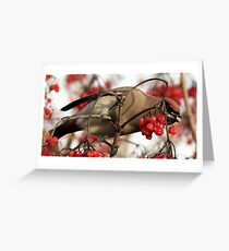 The Waxwing Greeting Card