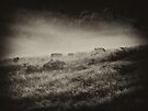 "'Breakfast in the Mist"" by debsphotos"