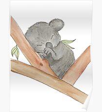 Cute Sleeping Baby Koala Poster