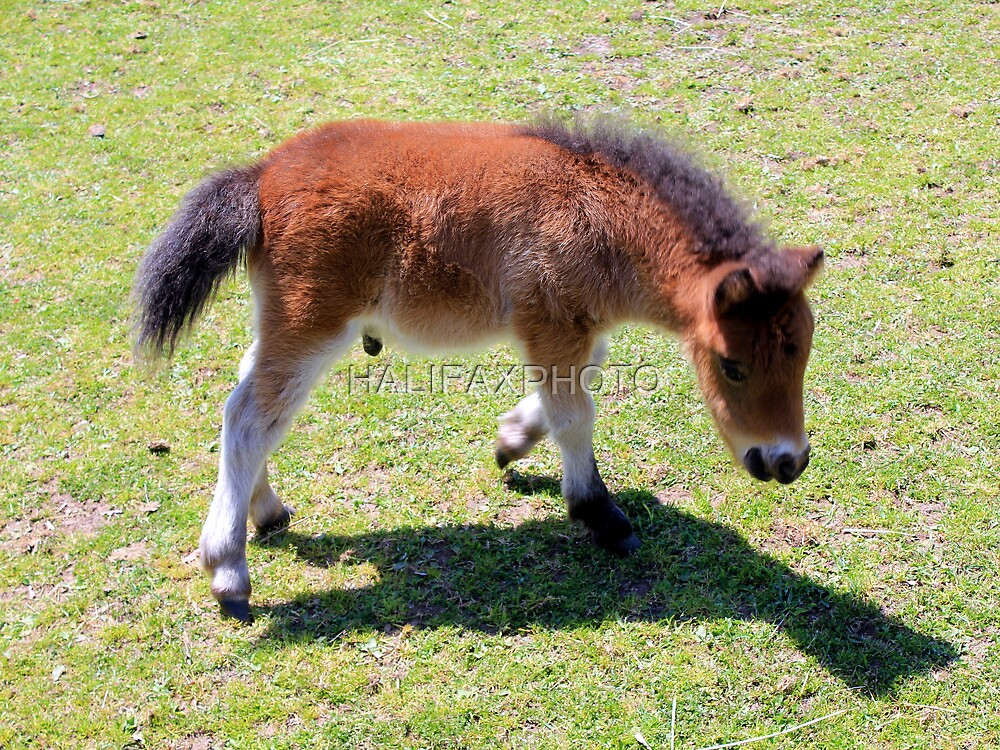Baby Horse by HALIFAXPHOTO