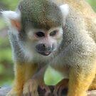 Squirrel Monkey by Paul Morley