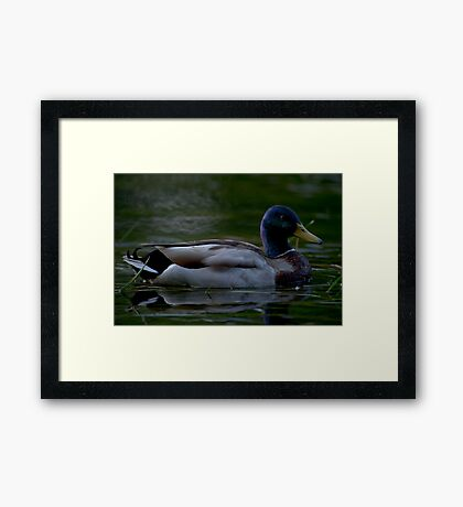 Alone with my thoughts Framed Print