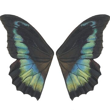 Butterfly Wings by cswicks