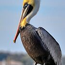 Brauner Pelikan von Kathy Baccari