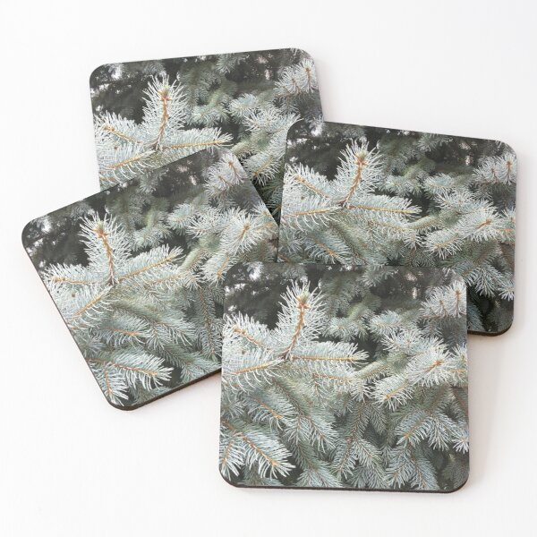 Silver Fir from A Gardener's Notebook Coasters (Set of 4)